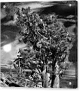 Deserted Tree Acrylic Print