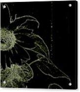 Designs Of Nature Acrylic Print
