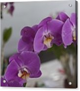 Dessert Orchids Acrylic Print