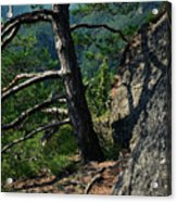 Detail Of A Pine On The Edge Of A Rock Acrylic Print