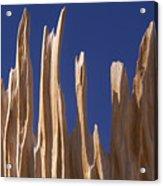 Detail Of Bristlecone Pine Acrylic Print