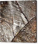 Detail Of Old Wood Sawn Acrylic Print