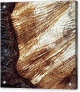 Detail Of Sawing Wood With Bark Acrylic Print