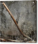 Detail Of Weathered Glass Lantern With Spider Webs And Mildew Acrylic Print