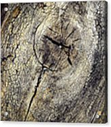 Detail Stumps On Old Wood Acrylic Print