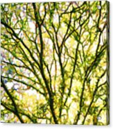 Detailed Tree Branches 1 Acrylic Print