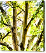 Detailed Tree Branches 2 Acrylic Print