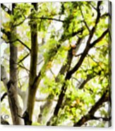 Detailed Tree Branches 3 Acrylic Print
