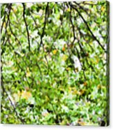 Detailed Tree Branches 4 Acrylic Print