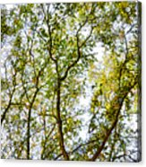 Detailed Tree Branches 5 Acrylic Print