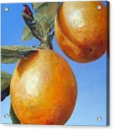 Deux Oranges Acrylic Print