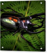 Devil Horned Rhino Beetle Acrylic Print