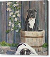 Devilish Duo At Rest Acrylic Print