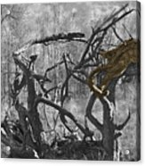 Devil's Tree Acrylic Print