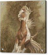 Devon The Gypsy Horse Acrylic Print