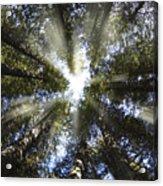 Devoto Grove Acrylic Print