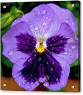 Dew Drop Butterfly Acrylic Print
