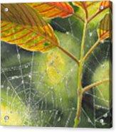 Dew Drop Acrylic Print