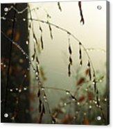 Dew Drop Garland Acrylic Print