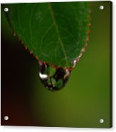 Dew Drop In Acrylic Print