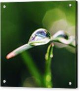 Dew Drop On Spring Grass Acrylic Print