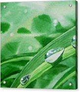 Dew Drops Acrylic Print by Irina Sztukowski