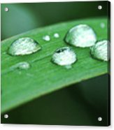 Dew Drops On A Blade Of Grass Acrylic Print