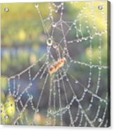 Dew Drops On A Spider Web Acrylic Print