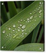 Dew Drops On Leaf Acrylic Print