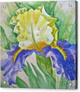 Dew Drops Upon Iris.2007 Acrylic Print