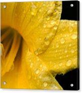 Dew Flower Acrylic Print