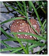 Dew It At The Creek Acrylic Print