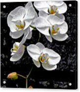Dew-kissed Cascading Orchids Acrylic Print