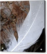 Dew On A Feather Acrylic Print