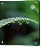 Dew On Grass Blade Acrylic Print