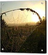 Dew On Spider Web At Sunrise Acrylic Print