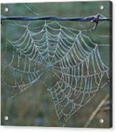 Dew On The Web Acrylic Print