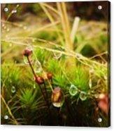 Dewdrop Fairyland Acrylic Print