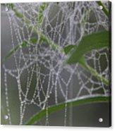Dewy Diamonds Acrylic Print