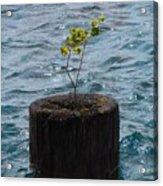 Pic Abv Acrylic Print