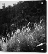 Diagonal Grasses Acrylic Print