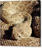 Diamondback Rattlesnake Close-up 062414a Acrylic Print