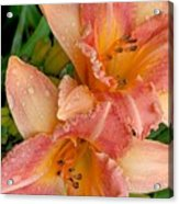 Diamonds And Lilies Watercolor Acrylic Print