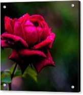 Diamonds On A Rose Acrylic Print