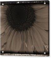 Diatrop Three Quarter Sunflower Acrylic Print
