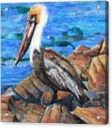 Dick The Pelican Acrylic Print