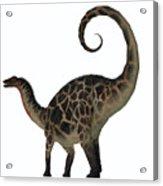 Dicraeosaurus Dinosaur Tail Acrylic Print