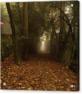 Diferent Paths Acrylic Print
