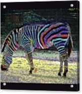 Differt Stripes For Different Types Acrylic Print