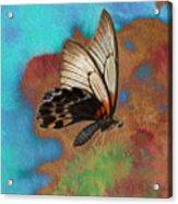 Digital Art Butterfly Acrylic Print